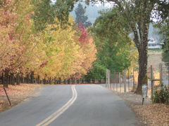 Autumn in Dry Creek Valley, Sonoma County